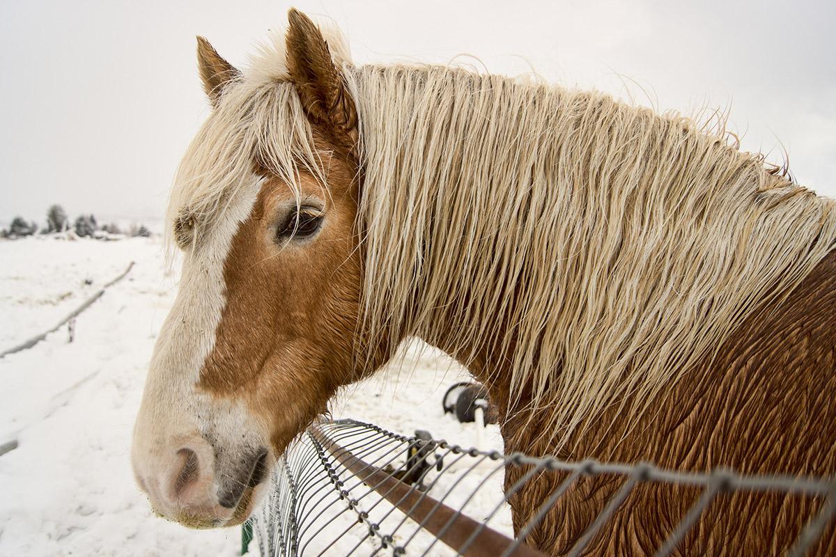 bailey's sleigh rides ogden valley winter wonderland